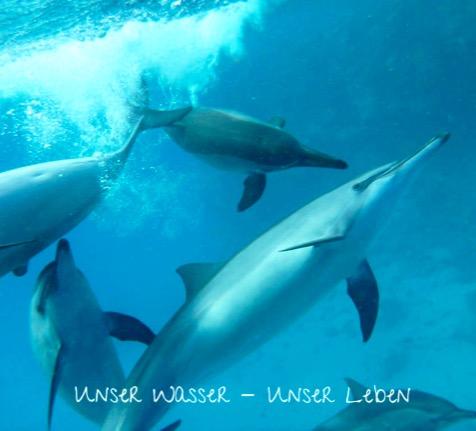 Delphine schwimmen im blauen Wasser