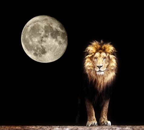 Löwe mit Vollmond
